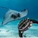 STURMANSKIE Automatic Ocean Stingray  NH35/1824895